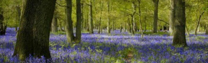 cropped-web-blue3.jpg